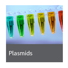 FLUO-plasmids_red Takara BIO